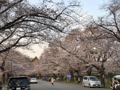 桜を見てきました(*'▽')